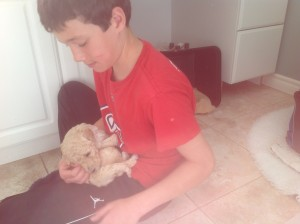 Cream standard poodle puppy cuddled by boy.
