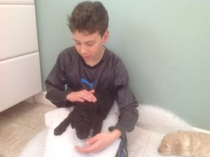 Black standard poodle puppy gets a cuddle.