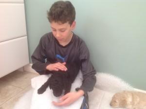 Black standard poodle puppy gets a cuddle.